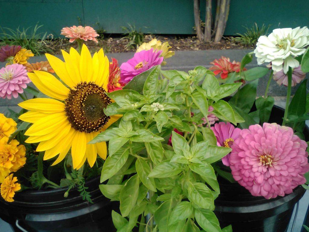 bsf-flowers